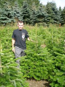 weihnachtsbaum-ueber-uns